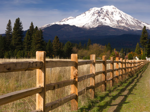 mount-shasta-ownership